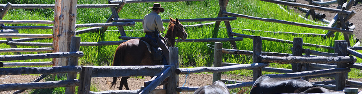 WY_Paradise_Guest_Ranch_Jul_10_1423